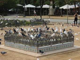 Birds at a park in Spain
