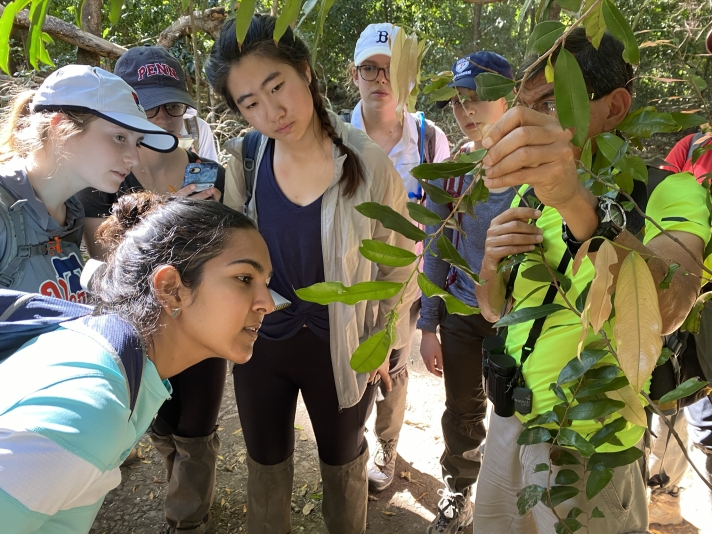 Students abroad looking at plants